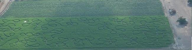 2014 Corn Maze Aerial View